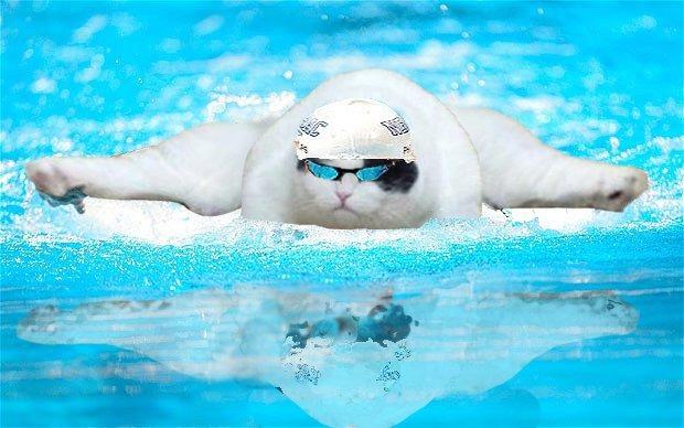 חתול שמן מטייל בעולם